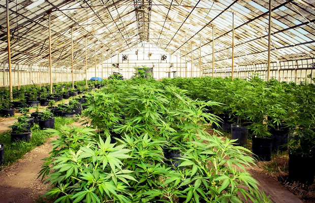 Cannabis Shares - a growing market