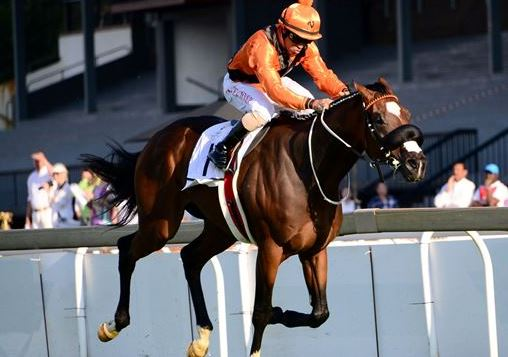 KZN thoroughbred auction to attract SA's horse racing elite