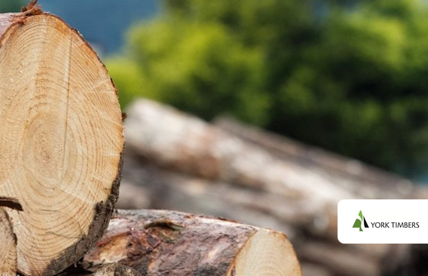 York flags lower earnings on timber valuation